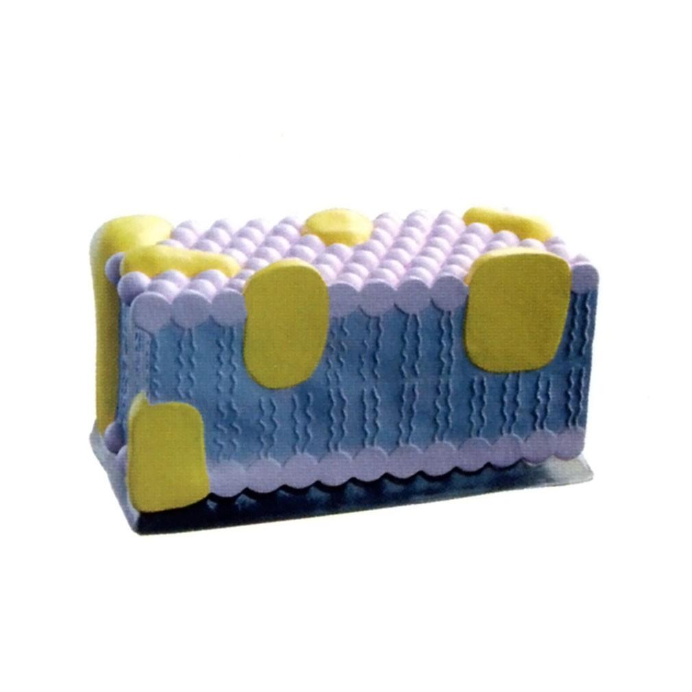 焊丝 思汀/细胞膜放大模型