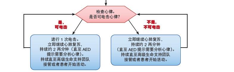 医学教学模型